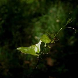 James Granberry - Leaf Light 3