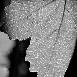 James Granberry - Leaf Light Black and White