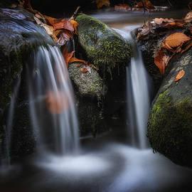 Steve Hurt - Leaves along small Stream 1