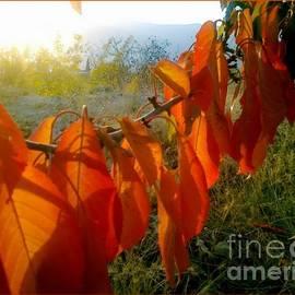 Freddy Kirsheh - Leaves
