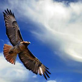 Daniel Lindquist - Let Your Spirit Fly