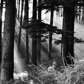 Don Schwartz - Light Through the Trees