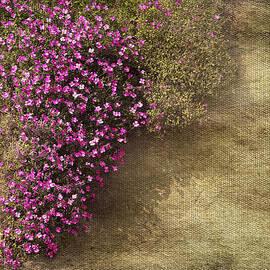 Svetlana Sewell - Lilac Branch