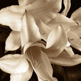 Jennie Marie Schell - Lily Flowers in Sepia