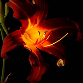 Greg and Chrystal Mimbs - Lily In the Light