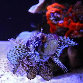 Karon Melillo DeVega - Lionfish