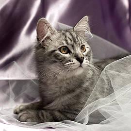 Raffaella Lunelli - Little cat on lilac