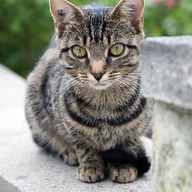 Ronny Schroeder - Little Cat