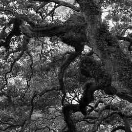 Al Powell Photography USA - Live Oak Limbs