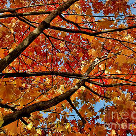 Alexandra Jordankova - Looking Through Red And Yellow Trees