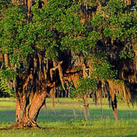 Al Powell Photography USA - Lowcountry Live Oak