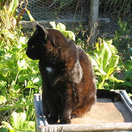 Ron McMath - Lula on her Garden Throne   In Memory