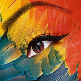 Yosi Cupano - Macaw