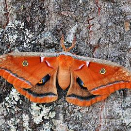 Al Powell Photography USA - Madam Moth