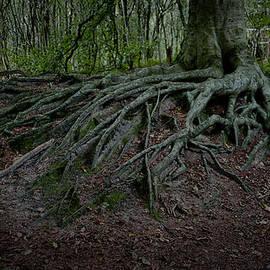 Daan  Overkleeft - Magic forest