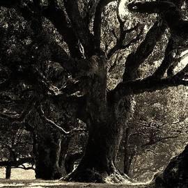 Prashant Ambastha - Magnificient Oldesst Tree