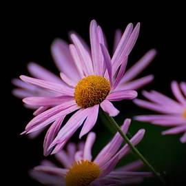 Angie Tirado-McKenzie - Mama Flower