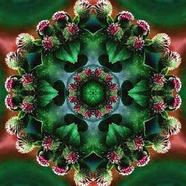 Nancy Griswold - Mandala Bull Thistle