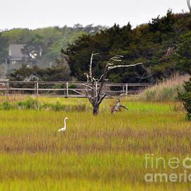 Al Powell Photography USA - Marsh Grass Egret
