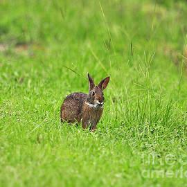 Al Powell Photography USA - Marsh Rabbit