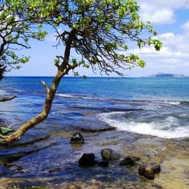 Kevin Smith - Maunalua Bay