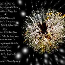 Pedro Cardona - Merry Xmas - Merry Christhmas - Greeting Card With An Iced Dandelion
