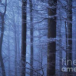 Katka Pruskova - Misty Forest