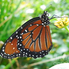 Chad and Stacey Hall - Monarch Butterfly