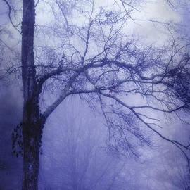 Judi Bagwell - Moonlit Tree