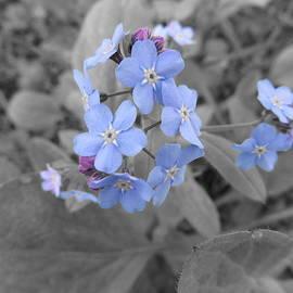 Lisa Smith - Morning flowers