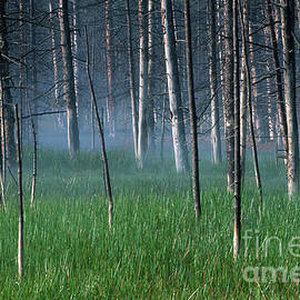 Sandra Bronstein - Morning Mist in Yellowstone