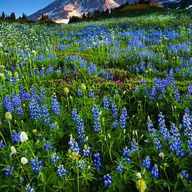 Mike  Dawson - Mountain Garden