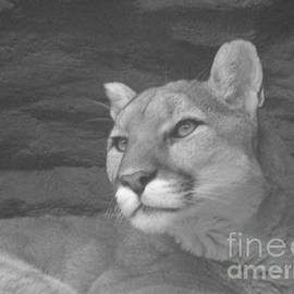 Donna Parlow - Mountain Lion in Black and White