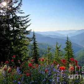 Idaho Scenic Images Linda Lantzy - Mountain Wildflowers