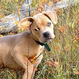 Donna Parlow - My Pretty Puppy