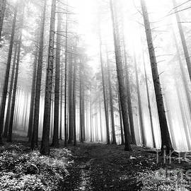 Michal Boubin - Mysterious Forest