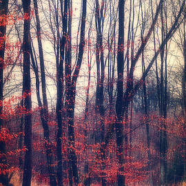 Angela Doelling AD DESIGN Photo and PhotoArt - Mystic Forest