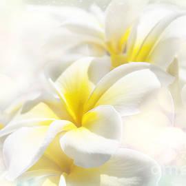 Sharon Mau - Na Lei Pua Melia Aloha e ko Lele - Yellow Tropical Plumeria Maui