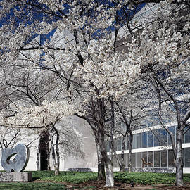 Carol M Highsmith - National Gallery East Wing Cherry Trees