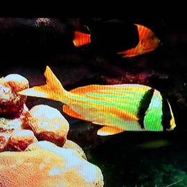 Val Oconnor - Neon Fish