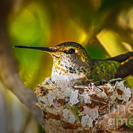 Robert Bales - Nesting