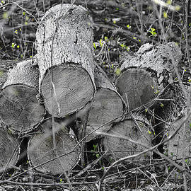 LeeAnn McLaneGoetz McLaneGoetzStudioLLCcom - New Life in the Old wood Pile
