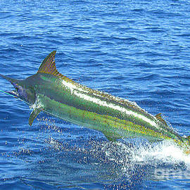 Merton Allen - No. 02 Marlin Hooked and Leaping in the Air