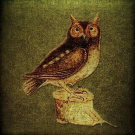 Li   van Saathoff - Noctua aurita minor