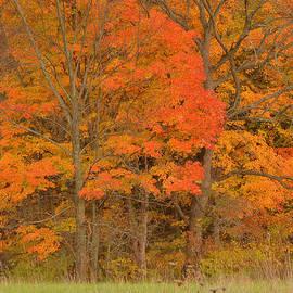 Stephen  Vecchiotti - Northeast Fall Colors