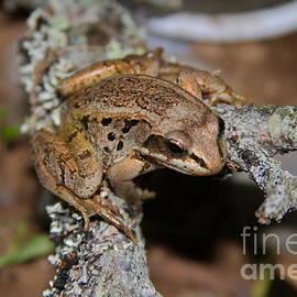 Rick  Monyahan - Northern Frog