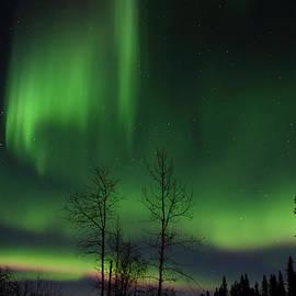 Steve  Milner - Northern Nights