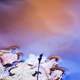 Heiko Koehrer-Wagner - Oak leaf cluster II