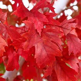 Kume Bryant - October Leaves