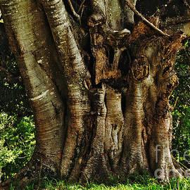 Kaye Menner - Old Fig Tree